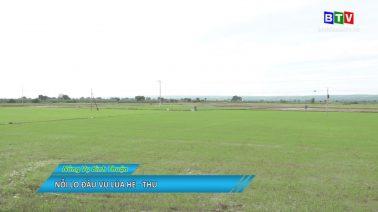 Nông vụ Bình Thuận 3-7-2020
