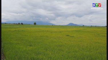 Nông vụ Bình Thuận 6-7-2020