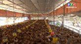 Câu chuyện nông nghiệp 31.3.2020